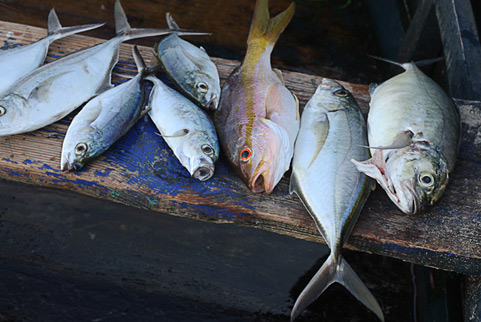frozen seafood products